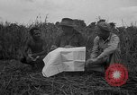 Image of Ferrying Indian soldiers in L-4 airplanes Senai New Guinea, 1944, second 25 stock footage video 65675072749