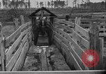 Image of cattle ranch United States USA, 1922, second 27 stock footage video 65675072785