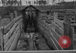 Image of cattle ranch United States USA, 1922, second 28 stock footage video 65675072785