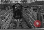 Image of cattle ranch United States USA, 1922, second 29 stock footage video 65675072785