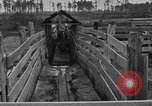 Image of cattle ranch United States USA, 1922, second 30 stock footage video 65675072785