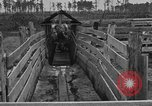 Image of cattle ranch United States USA, 1922, second 31 stock footage video 65675072785