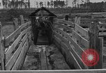 Image of cattle ranch United States USA, 1922, second 32 stock footage video 65675072785