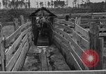 Image of cattle ranch United States USA, 1922, second 33 stock footage video 65675072785