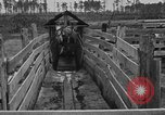 Image of cattle ranch United States USA, 1922, second 34 stock footage video 65675072785