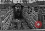 Image of cattle ranch United States USA, 1922, second 36 stock footage video 65675072785