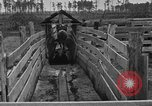 Image of cattle ranch United States USA, 1922, second 37 stock footage video 65675072785