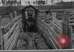 Image of cattle ranch United States USA, 1922, second 38 stock footage video 65675072785