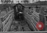 Image of cattle ranch United States USA, 1922, second 40 stock footage video 65675072785