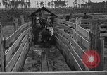 Image of cattle ranch United States USA, 1922, second 41 stock footage video 65675072785
