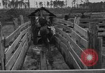 Image of cattle ranch United States USA, 1922, second 42 stock footage video 65675072785