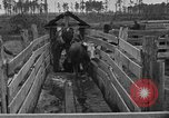 Image of cattle ranch United States USA, 1922, second 43 stock footage video 65675072785