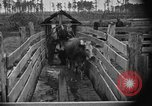 Image of cattle ranch United States USA, 1922, second 44 stock footage video 65675072785