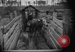 Image of cattle ranch United States USA, 1922, second 45 stock footage video 65675072785
