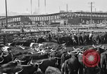 Image of cattle ranch United States USA, 1922, second 54 stock footage video 65675072786