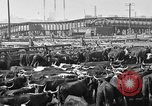 Image of cattle ranch United States USA, 1922, second 55 stock footage video 65675072786