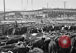 Image of cattle ranch United States USA, 1922, second 56 stock footage video 65675072786