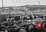 Image of cattle ranch United States USA, 1922, second 57 stock footage video 65675072786