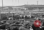 Image of cattle ranch United States USA, 1922, second 58 stock footage video 65675072786