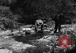 Image of gold panning Arizona United States USA, 1920, second 28 stock footage video 65675072788