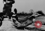 Image of Christmas celebration Germany, 1943, second 30 stock footage video 65675072798