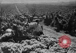 Image of Germany invades on Eastern Front Soviet Union, 1941, second 53 stock footage video 65675072841