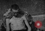 Image of Atrocity victims Germany, 1945, second 31 stock footage video 65675072906