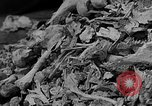 Image of Buchenwald Concentration Camp Germany, 1945, second 22 stock footage video 65675072908