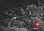 Image of Buchenwald Concentration Camp Germany, 1945, second 57 stock footage video 65675072908