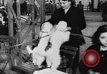 Image of dog show Paris France, 1954, second 20 stock footage video 65675073125