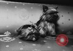 Image of dog show Paris France, 1954, second 28 stock footage video 65675073125