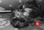 Image of dog show Paris France, 1954, second 31 stock footage video 65675073125
