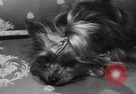 Image of dog show Paris France, 1954, second 32 stock footage video 65675073125