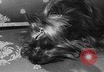 Image of dog show Paris France, 1954, second 33 stock footage video 65675073125