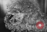 Image of dog show Paris France, 1954, second 38 stock footage video 65675073125