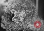 Image of dog show Paris France, 1954, second 40 stock footage video 65675073125