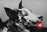 Image of dog show Paris France, 1954, second 49 stock footage video 65675073125