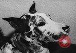 Image of dog show Paris France, 1954, second 50 stock footage video 65675073125