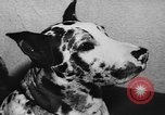 Image of dog show Paris France, 1954, second 51 stock footage video 65675073125