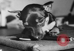 Image of dog show Paris France, 1954, second 62 stock footage video 65675073125