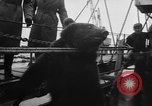 Image of Private Teddy Bear New York United States USA, 1957, second 19 stock footage video 65675073132