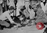 Image of gamecock fight Haiti West Indies, 1924, second 40 stock footage video 65675073268