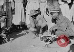 Image of gamecock fight Haiti West Indies, 1924, second 42 stock footage video 65675073268