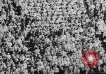 Image of football match United States USA, 1967, second 23 stock footage video 65675073292