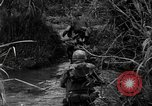 Image of Vietcong captured by Marines Vietnam, 1967, second 30 stock footage video 65675073301