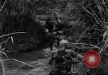 Image of Vietcong captured by Marines Vietnam, 1967, second 31 stock footage video 65675073301