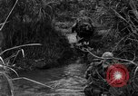 Image of Vietcong captured by Marines Vietnam, 1967, second 32 stock footage video 65675073301