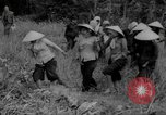 Image of Vietcong captured by Marines Vietnam, 1967, second 53 stock footage video 65675073301