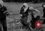 Image of Vietcong captured by Marines Vietnam, 1967, second 54 stock footage video 65675073301