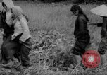 Image of Vietcong captured by Marines Vietnam, 1967, second 56 stock footage video 65675073301